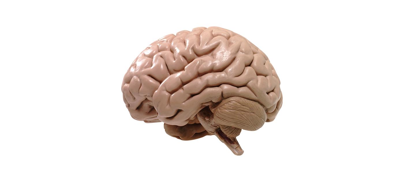 картинка с мозгами и надписью мозги следует